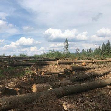 Fichtenholz als Brennholz abzugeben